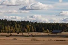 зона Россия haystacks поля krasnodar стоковые изображения rf