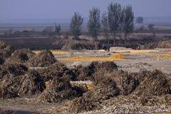 зона сельская Стоковое Изображение RF