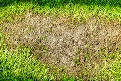 зона сухой травы не может вырасти, что-то покрыть это и не делает имеет свет солнца стоковые изображения rf