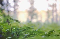 Зона Forrested с листьями в макросе переднего плана Стоковое Изображение RF