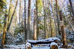 Зона Kaluga, Россия - ноябрь 2017: Славянские языческие идолы на виске леса стоковое изображение