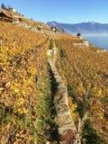 Зона Lavaux, Швейцария Стоковая Фотография RF