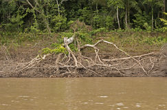 Зона Riparian реки джунглей Стоковое Изображение RF