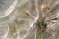 Зонтики волос Стоковые Фото