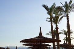 Зонтики от сена, в форме солома шляпы лета желтого пляжа соломы солнц-защитные против фона верхних частей зеленых ладоней Стоковое Изображение RF