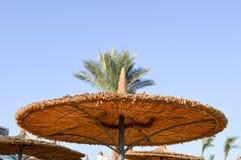 Зонтики сделанные из сена, в форме солома шляпы лета желтого пляжа солнц-защитные против фона верхних частей зеленых ладоней Стоковые Изображения