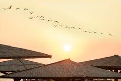 Зонтики тенты от солнца от соломы и стада птиц пеликана в небе между рассветом солнца на пляже Стоковое Фото