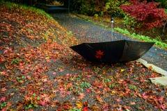 Зонтик вверх ногами в парке осени Стоковая Фотография RF