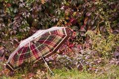 Зонтик в осени Стоковые Фото