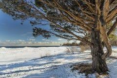 Зонтик дерева Стоковые Фото