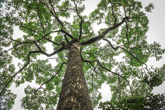 Зонтик дерева Стоковое фото RF