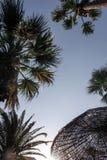 Зонтик и пальма соломы Стоковое фото RF