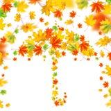 Зонтик от листьев осени Стоковая Фотография