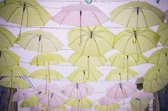Зонтик цветов полный Стоковое Фото