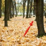 зонтик Стоковая Фотография