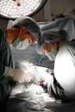 2 зооветеринарных хирурга в операционной Стоковая Фотография
