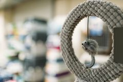 Зоомагазин, кольцо с мышью, аксессуарами для кота стоковые изображения