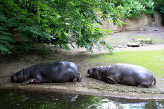 Зоопарк Берлина Стоковое Изображение RF