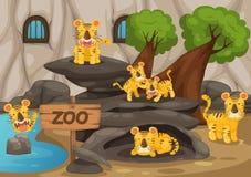 Зоопарк и тигр Стоковые Изображения RF