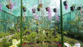 Зоопарк Сайгона и ботанические сады Стоковые Фотографии RF
