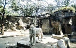 Зоопарк Сайгона и ботанические сады Стоковая Фотография RF