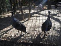 Зоопарк Стоковые Изображения
