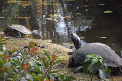 Зоопарк Amneville: черепаха стоковые изображения
