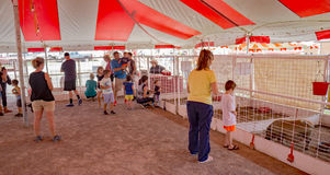 Зоопарк Hedrick's Petting Стоковая Фотография