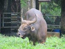 Зоопарк Ragunan, Джакарта Стоковая Фотография RF