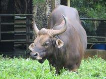 Зоопарк Ragunan, Джакарта Стоковая Фотография