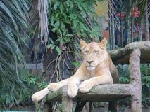 Зоопарк Ragunan, Джакарта Стоковые Изображения RF