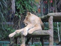 Зоопарк Ragunan, Джакарта Стоковое фото RF