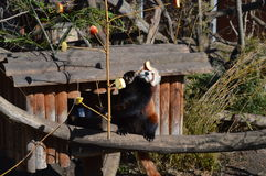 Зоопарк Schonbrunn Стоковое фото RF