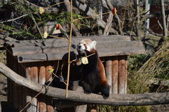 Зоопарк Schonbrunn Стоковые Фото