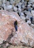 Зоология, насекомое Стоковые Фото