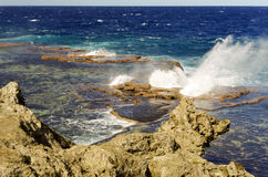 Золоедины, Тонга Стоковые Фото