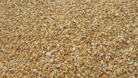 Золотая естественная предпосылка песка Стоковые Фотографии RF