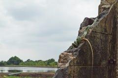 Золотая змейка дерева Стоковое Фото