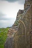 Золотая змейка дерева Стоковые Фотографии RF
