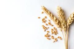 Золотая зрелая пшеница на белой предпосылке Стоковые Фотографии RF