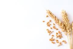 Золотая зрелая пшеница на белой предпосылке Стоковые Фото
