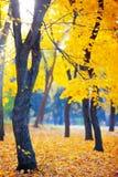Золотая осень в лесе Стоковое Изображение