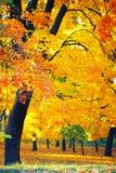 Золотая осень в лесе Стоковые Изображения