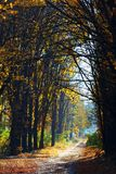 Золотая осень в лесе Стоковое Фото