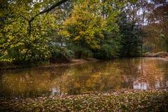 Золотая осень в Нидерландах Стоковые Фотографии RF