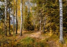 Золотая осень в октябре Стоковая Фотография RF