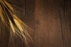 Золотая пшеница стоковое фото rf