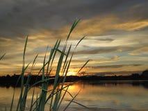 Золотая солнечность солнца вечера светит с водой и затеняет дерево Стоковое Изображение RF