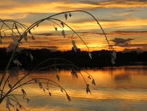 Золотая солнечность солнца вечера светит с водой и затеняет дерево Стоковое фото RF