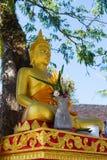 Золотая статуя Будды сидя около дерева Стоковое Изображение RF